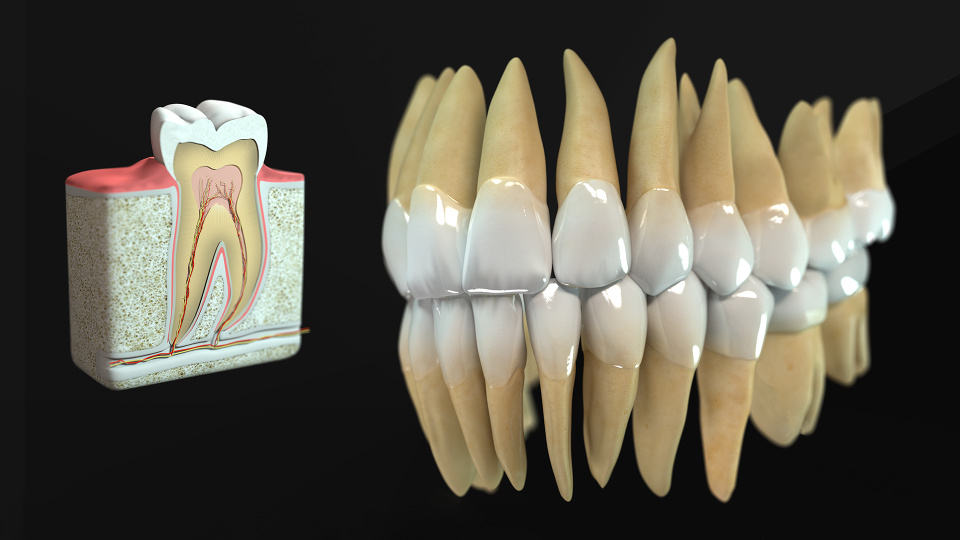 Photo-realistic 3D teeth visualization